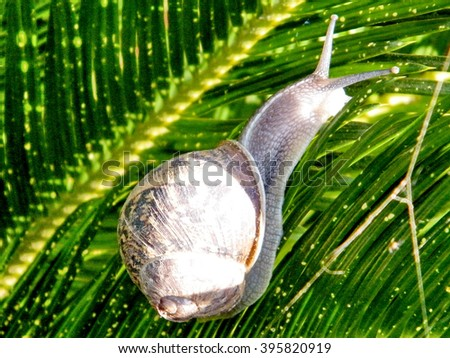 The snail isolated on bracken in Or Yehuda, Israel - stock photo