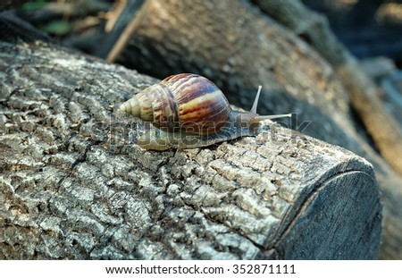 The snail on the timber - stock photo