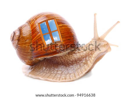 The snail with window on a shell. Easy housing metaphor. Real estate business concept. - stock photo