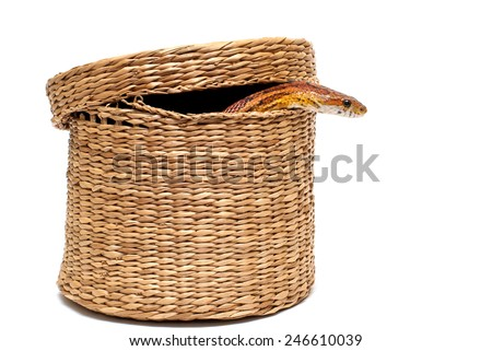 The snake in the basket - stock photo