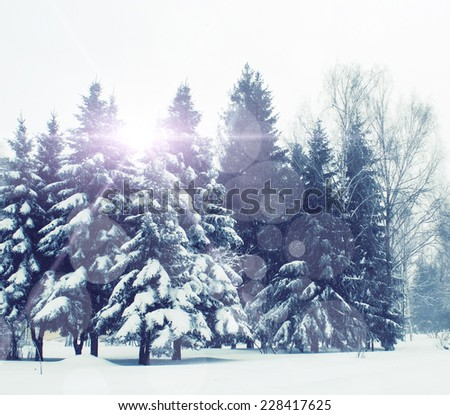 The snow covered fir trees in mountains