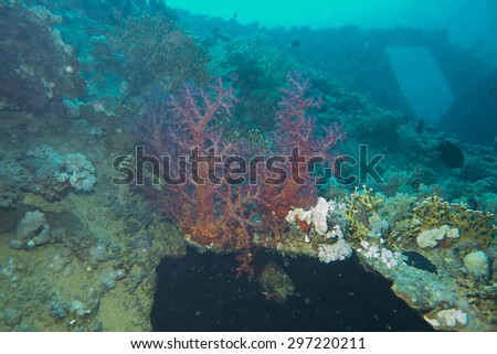 The soft coral, Dendronephthya, and Millepora dichotoma  Fire  coral on the  stern entrance of the wreck of the Steamer and Sailboat, the Dunraven which hit the reef at Beacn Rock in 1876 - stock photo