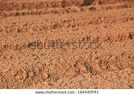 The soil Cabbage Patch prepared planted in the farm