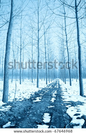 the soil road in the forest at winter