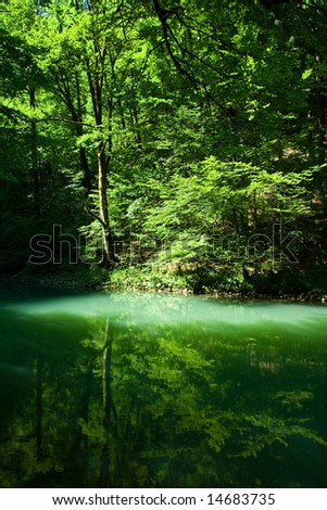 The source of the river Kupa in forest, Croatia - stock photo
