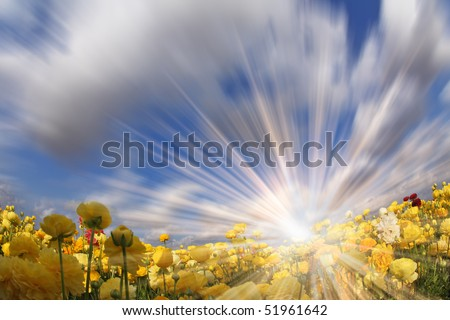 "The sparkling sun shines a field with blossoming yellow spring buttercups. The photo is made by a lens ""Fish eye"" - stock photo"