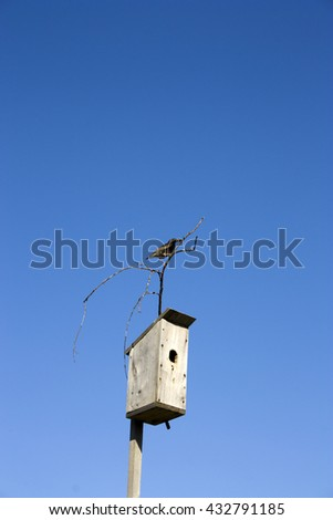 the Sparrow sits on the birdhouse - stock photo
