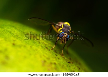 The spawn of the fruit fly. - stock photo