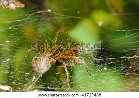 The spider attacking an ant. Macro. Adobe RGB . - stock photo