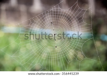 The spider builds webs to catch insects as food. - stock photo