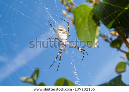 The spider in the web close up against the sky - stock photo