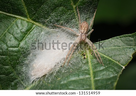 The spider keeps network with cubs on the leaves - stock photo