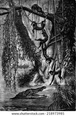 The spider monkeys. Gators await the right moment to snap the last, vintage engraved illustration. Journal des Voyages, Travel Journal, (1880-81). - stock photo