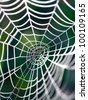 The spider web (cobweb) closeup background. - stock photo