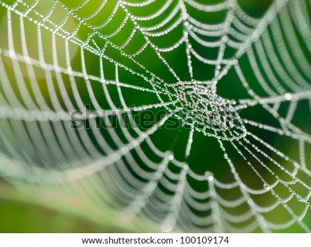 The spider web (cobweb) closeup background.