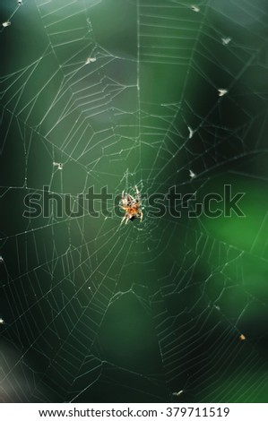 The spider web (cobweb) closeup background. The Spider Web at sunrise. Spider web with colorful background, nature series. Cobweb with dew drops on a blue background. Spider web.