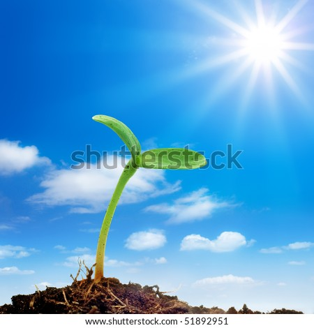 The sprout reaches for the sky - stock photo