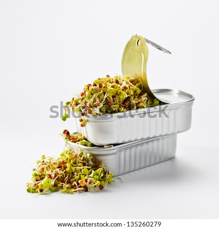 The sprouted seeds in an open can. Symbolizes care for life and the ecosystem for a sustainable future. - stock photo