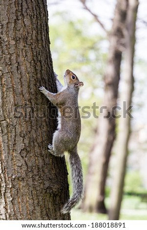 the squirrel climbing - stock photo
