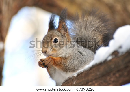 The squirrel sits on a tree. - stock photo
