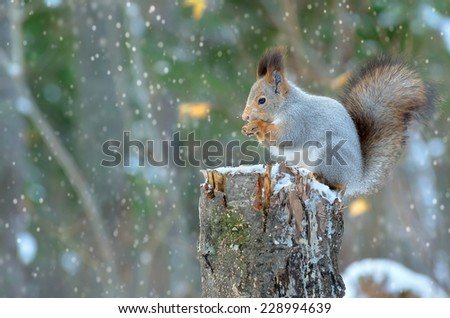 The squirrel sits on a tree stump - stock photo