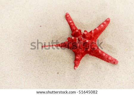 The starfish in sand on the beach