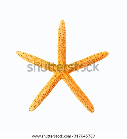 The starfish on a white background - stock photo
