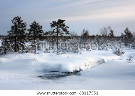 The stream freezing by winter flowing in marsh district, Russia, Siberia - stock photo