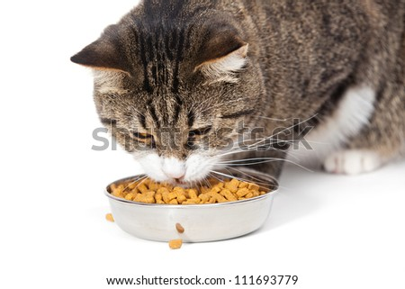 The striped cat eats a dry feed, is isolated on a white background - stock photo