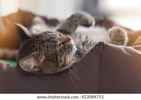 The striped cat sleeping on one side - stock photo