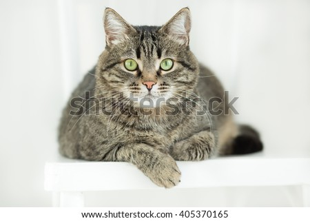 The striped green-eyed cat lies on a white chair and attentively looks  at a camera - stock photo