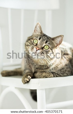 The striped green-eyed cat lies on a white chair and attentively looks upward - stock photo