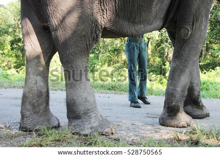 The structure of elephant. Frame within a frame. Jaldapara National Park. West Bengal in India.