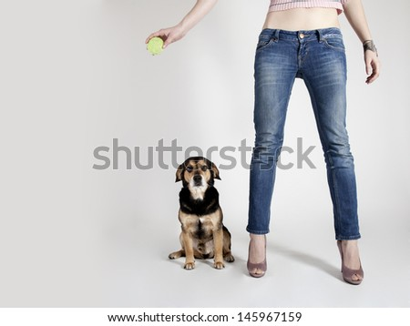 The studio portrait of the sitting dog by the leg - stock photo