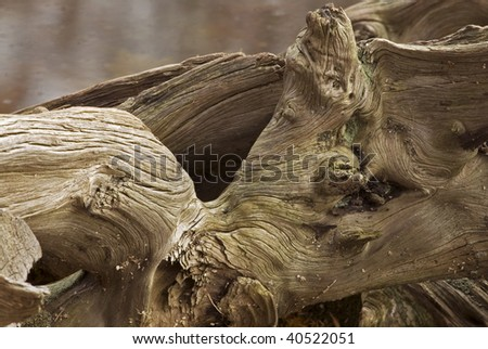 The stump of a tree around the pond at St. John's Conservation area in Fonthill, Ontario, Canada. - stock photo