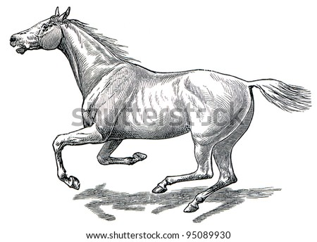 """The style walk a horse. Full gallop. Publication of the book """"Meyers Konversations-Lexikon"""", Volume 7, Leipzig, Germany, 1910 - stock photo"""