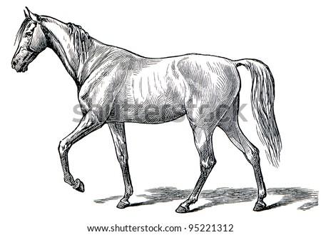 "The style walk a horse. Step. Publication of the book ""Meyers Konversations-Lexikon"", Volume 7, Leipzig, Germany, 1910 - stock photo"