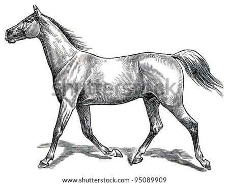 "The style walk a horse. Trot (horse gait). Publication of the book ""Meyers Konversations-Lexikon"", Volume 7, Leipzig, Germany, 1910 - stock photo"