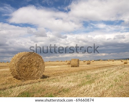 The summer day on field of wheat - stock photo