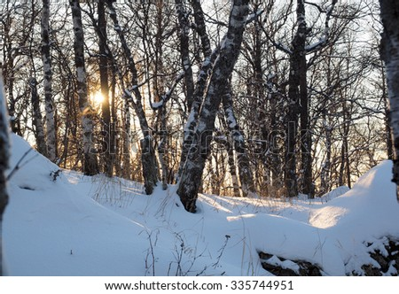 The sun between birch trees with snow on the Sunduk mountain slope in the winter evening, South Urals, Russia. - stock photo