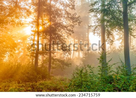 the sun goes up through the foliage in the forest