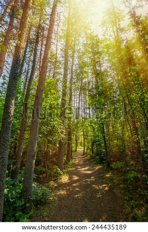 The sun highlights a pathway through the Haunted Forest in Prince Edward Island National Park, Canada.  The Haunted Forest refers to the forest in L. M. Montgomery's book 'Anne of Green Gables'.  - stock photo