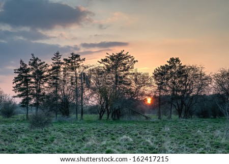 The sun is setting behind a line of twisted and broken pine trees. - stock photo