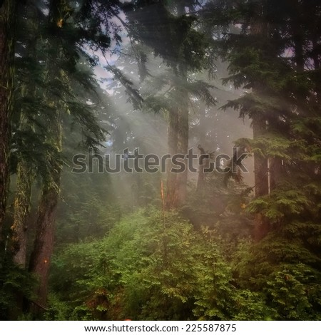 The sun peeking through some trees in a forest. - stock photo