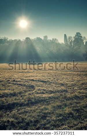 The sun rays in the morning fog - stock photo