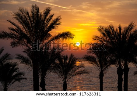 The sun rising over palm trees and the Red Sea, South Sinai, Egypt. - stock photo