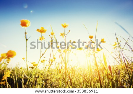 The sun's rays breaking through the grass. Green Summer Meadow close up. - stock photo
