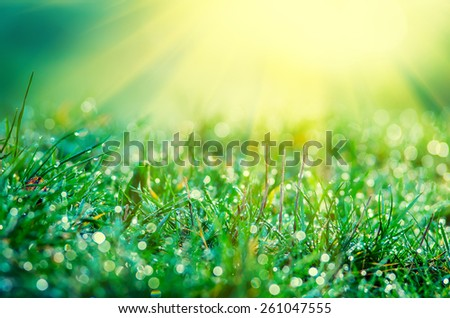 The sun's rays from above and green grass. abstract composition - stock photo
