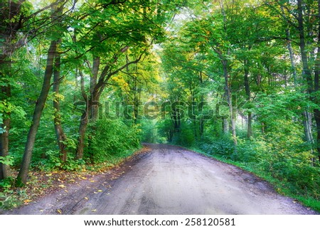 the sun's rays illuminate the road in the woods  - stock photo