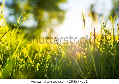 The sun's rays make their way through the grass. View from ground level - stock photo